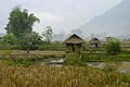 View over rice fields. (4115407612).jpg