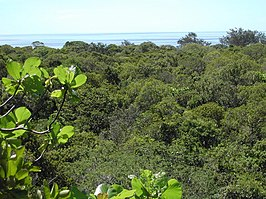 View over tropical dry forest to coastal strand vegetation on Jaco Island, Tutuala, Lautem, Timor-Leste.jpg