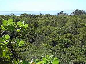 Jaco Island - Image: View over tropical dry forest to coastal strand vegetation on Jaco Island, Tutuala, Lautem, Timor Leste