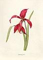 Vintage Flower illustration by Pierre-Joseph Redouté, digitally enhanced by rawpixel 04.jpg