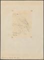 Vireolanius icterophrys - 1855 - Print - Iconographia Zoologica - Special Collections University of Amsterdam - UBA01 IZ16600273.tif