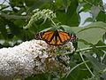 WPZ Butterflies & Blooms 03.jpg