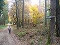 Waldweg im Nussbaumer Hardt - geo.hlipp.de - 15189.jpg