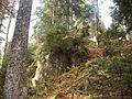 Wanderung im November - panoramio (46).jpg