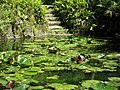 Water lilies at the Pena Park (49838458376).jpg