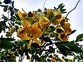 Wayanadan-random-flowers IMG 20180524 153455 HDR (42378237661).jpg