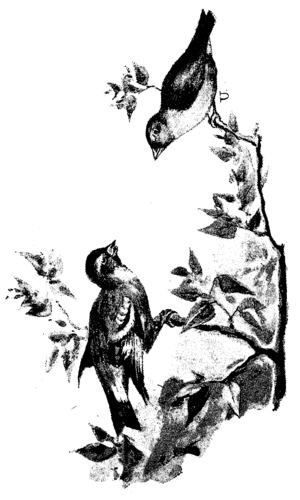 babcia ssać duży czarny kogut czarno-białe cipki lesbijek jedzenia