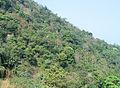 Western Ghats Vegetation - View en route Kottiyoor to Mananthavady20.jpg