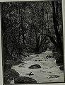 Western field (1905) (14779578325).jpg