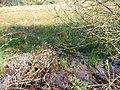 Wetland near Dalbeattie. - geograph.org.uk - 134255.jpg