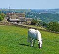 White Horse (2591156250).jpg