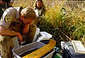 Wild trout project e walker river bridgeport0092 (25673092463).jpg