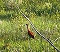 Wildlife Wednesday (6022128319).jpg