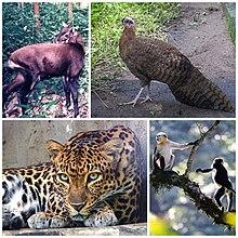 Fotografias de espécies nativas no Vietnã, o argus com crista;  o douc de canela vermelha, um macaco;  o leopardo da Indochina e a saola, um bovino.