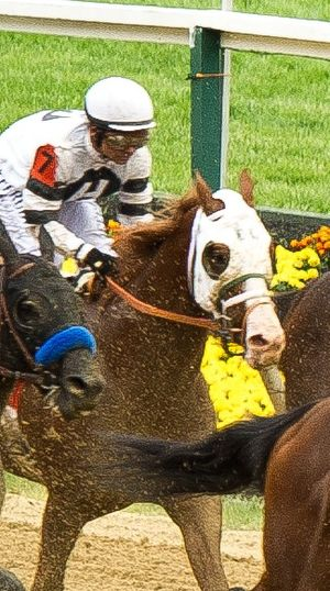 Will Take Charge - Will Take Charge at the 2013 Preakness Stakes