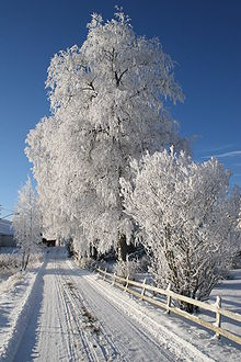 Winter in Norway2.jpg