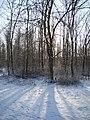 Winter scene met tegenlicht - panoramio.jpg