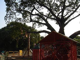 Lam Tsuen wishing trees - One of the two Lam Tsuen Wishing Trees.