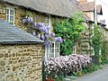 Wisteria and clematis - geograph.org.uk - 417950.jpg