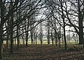 Wood near Spinney Farm - geograph.org.uk - 635740.jpg