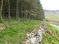 Woodland edge - geograph.org.uk - 432646.jpg
