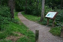 Woodland walks - geograph.org.uk - 563324.jpg