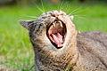 Yawn!!! (331702223).jpg