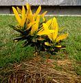 Yellow Life Of Plants.jpg