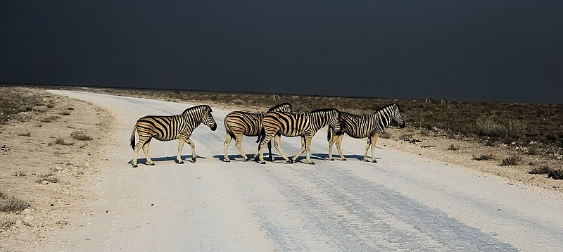 File:Zebra Crossing Abbey Road Style (63894353).jpeg