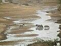 Zebras in Tanzania 0749 Nevit.jpg