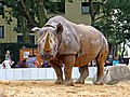 Zoo-nashorn-ffm002.jpg