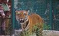 Zoo of Ahmedabad, India (4052629860).jpg