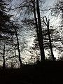 Zum Born 2 - panoramio.jpg