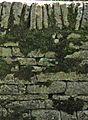 =Mousses sur un mur.jpg