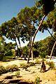 ® ┼ M.D. EL CAMPELLO VILLA MARCO JARDÍN - panoramio (15).jpg