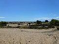 Αμμοθίνες στην Παραλία Καλογριάς - Sand dunes at Kalogria Beach.jpg