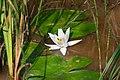 Бондарівське болото 6.jpg