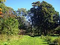 В парке - panoramio (22).jpg