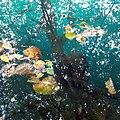 Глубина Голубого озера.jpg