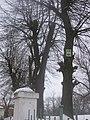 Група вікових лип та каштанів, Городок.jpg