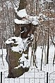 Дуб Шевченка в парку Березовий гай 01.jpg