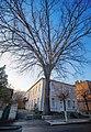 Красень дуб зонтичного (ясенеподібного) типу.jpg
