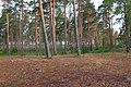Кургальский полуостров, лес у Выбьинского пляжа.jpg