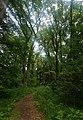 Любіньський ліс.jpg