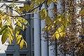 Музей В'ячеслава Липинського — (105).jpg