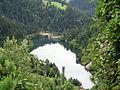 НП03 Национални парк Тара.jpg