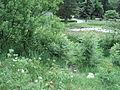 Парк шума Гази Баба во мај (80).JPG
