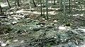 Ручей - panoramio (6).jpg
