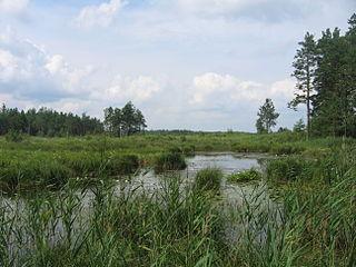 Polissia Nature Reserve