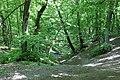 Сирецький гай, IMG 7820.jpg